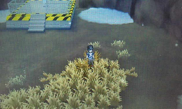 サンムーンでニューラの出現する草むら