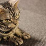 CanonKissX5 猫カフェの猫③